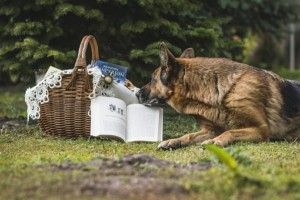 A book is leaning against a picnic basket.  The dog in front of it appears to be reading.