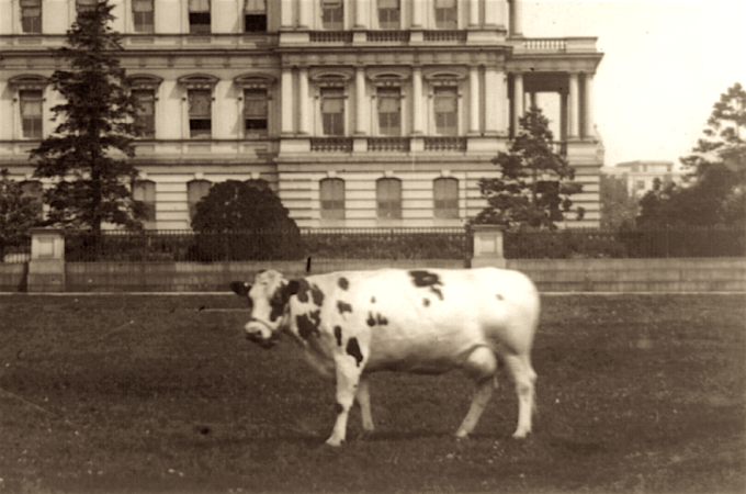 Pauline Wayne, William Howard Taft's Cow. 1909, in front of the State, War and Navy Building, Washington, D.C.