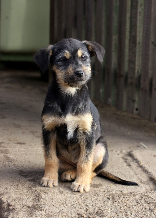 This is a black and brown mix-breed puppy who reminds me of the puppy in this post.
