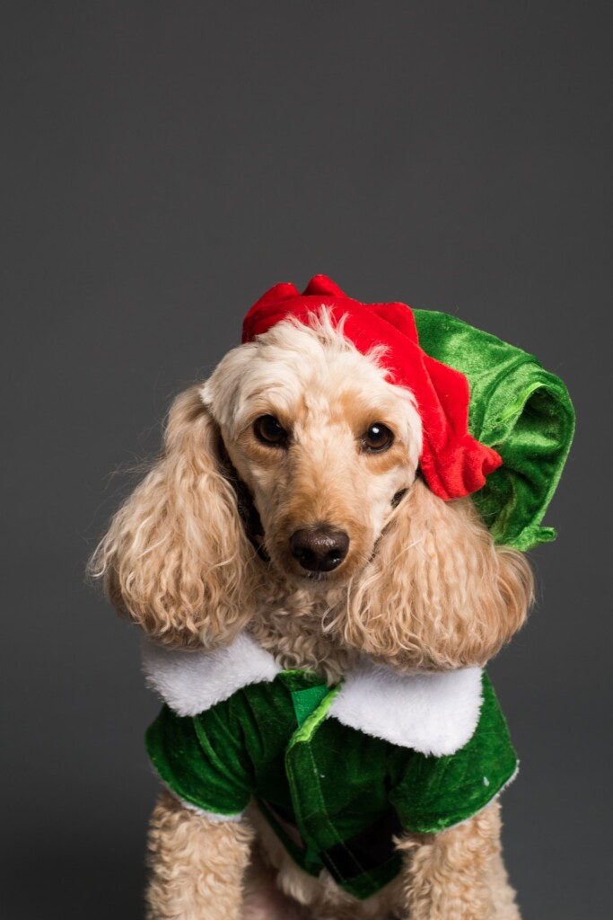 Dog in Elf Costume Image by J Lloa from Pixabay